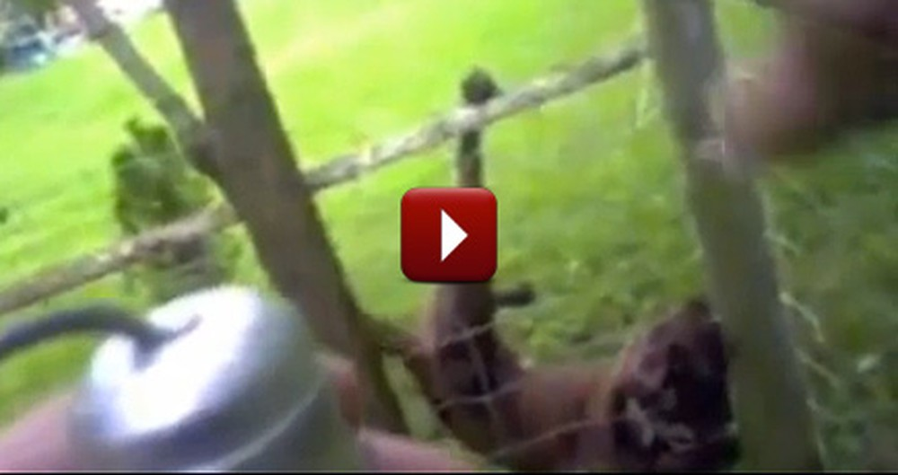 Police Officer Saves a Dog Stuck in a Fence - The End Will Blow You Away