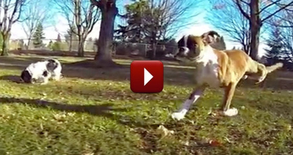 A Two-Legged Dog is an Inspiration to Us All - the Ultimate Feel Good Video