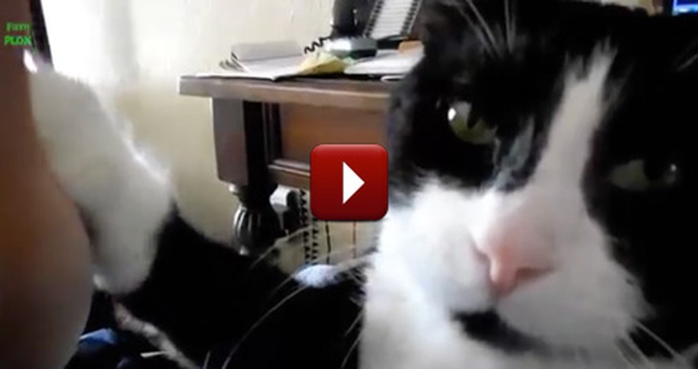 Cute Cats High Five Their Owners - And Will Steal Your Hearts