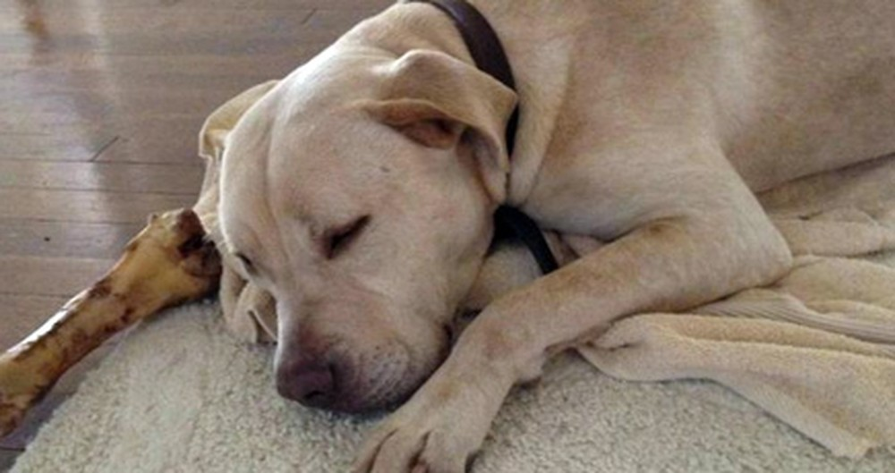 Complete Strangers Help a Girl Locate Her Missing Pup