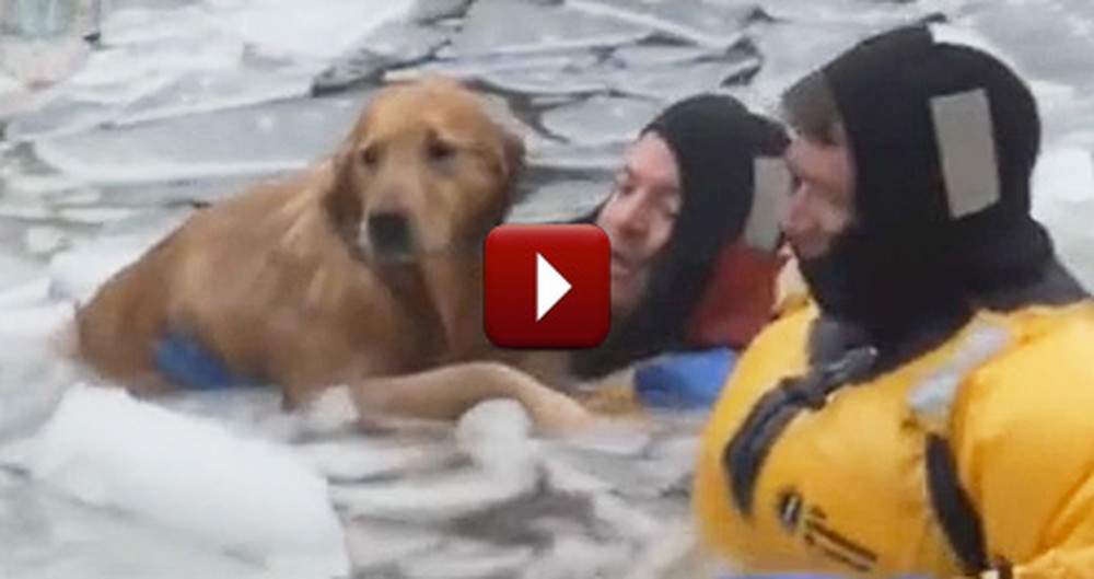 A Frightened, Frozen Pup Gets Rescued by Brave Firefighters
