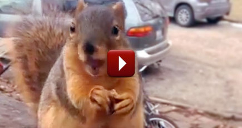 A Hilarious Talking Squirrel Has a Super Important Message for His Neighbor