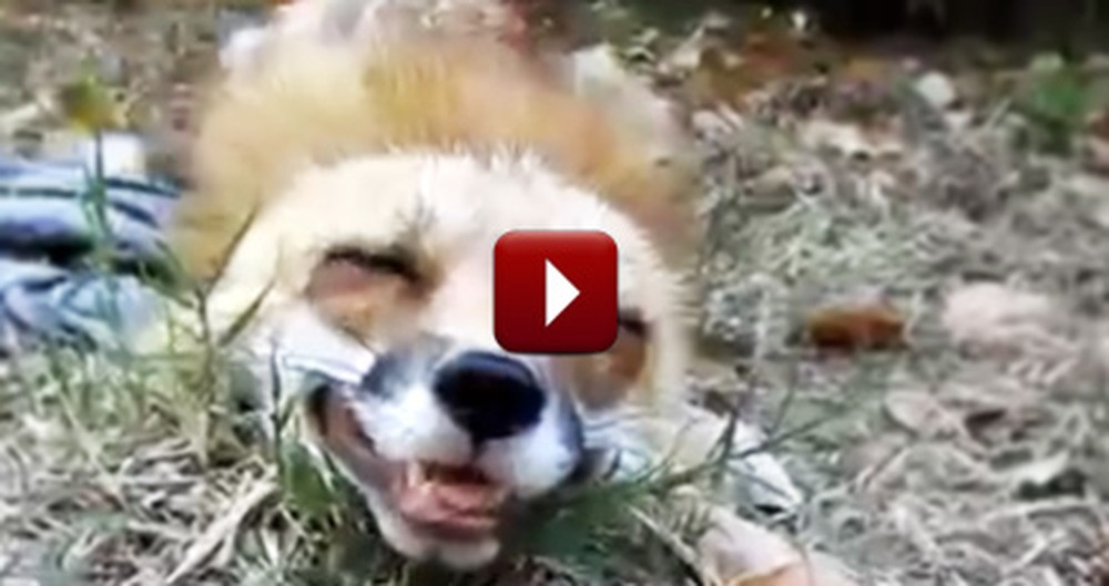 Fox's Reaction to Getting Pet is the Cutest Thing Ever