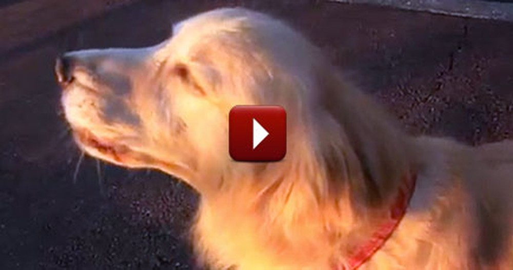 Hilarious Little Dog Nails an Impression of a Police Siren