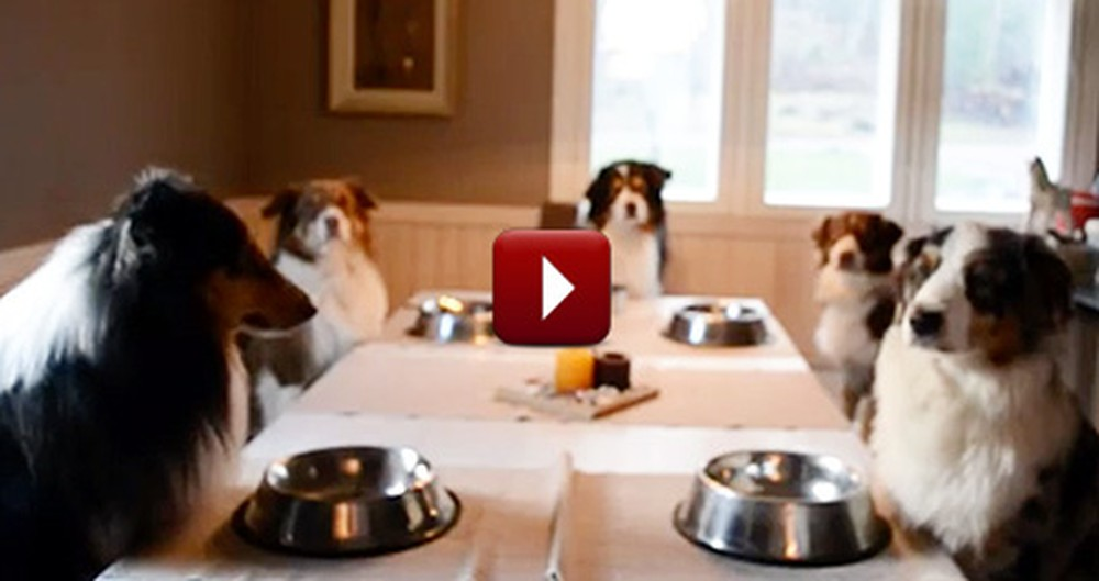 Family of Dogs Say Grace Together Before a Meal - Amen, Puppies!