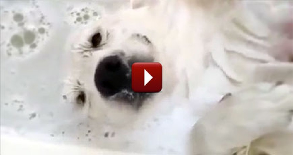Adorable Dog Just Loves Taking a Bath