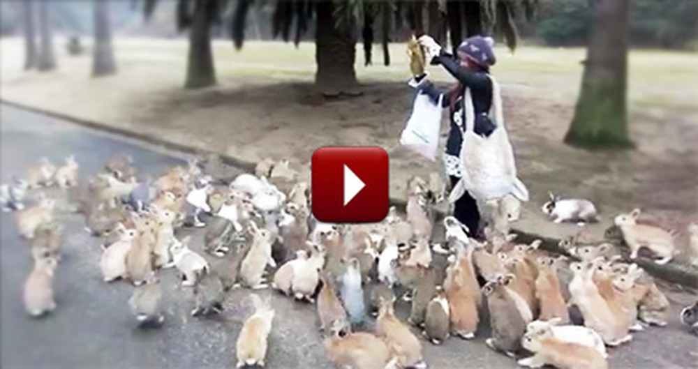 Stampede of Adorable Rabbits Chase After One Lucky Girl