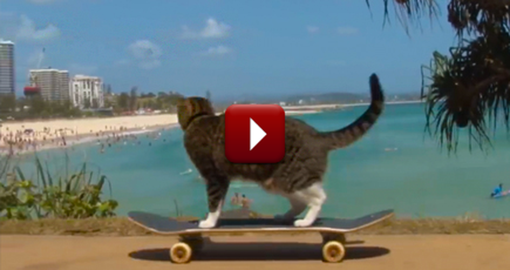 This Adorable Kitty is Absolutely the Cutest Thing on Wheels!