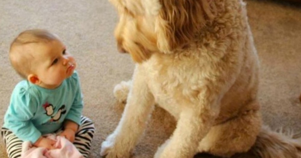 6 Reasons Why We Love Our Cute Dogs -- Awww!