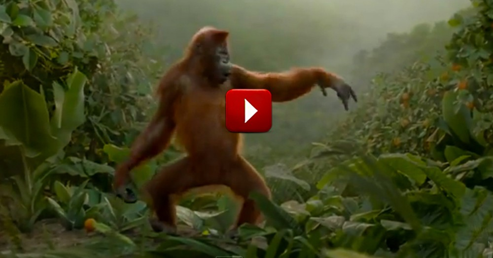 Funny Orangutan Will Brighten Your Day