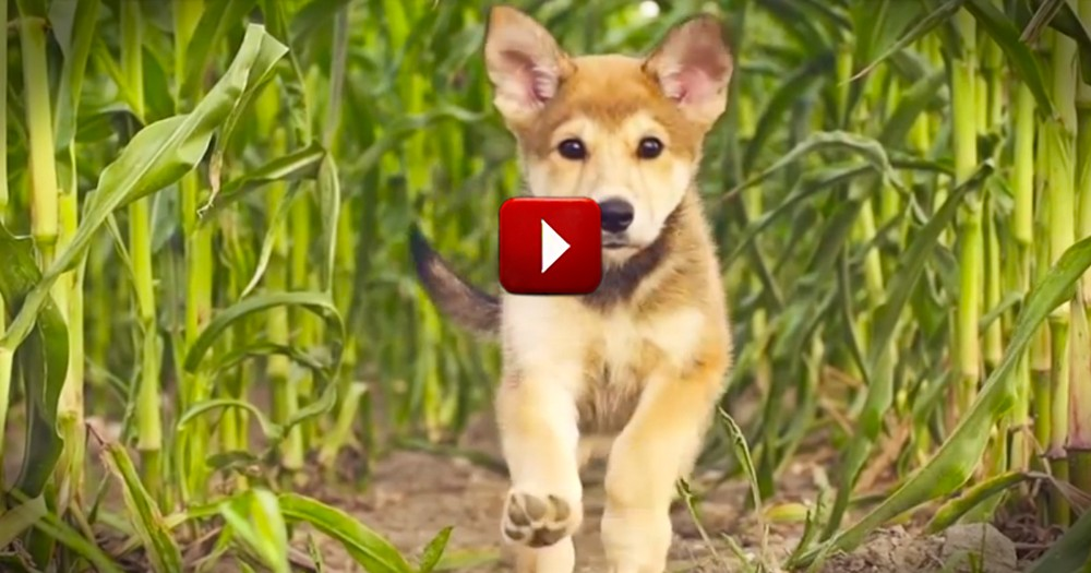 Adorable Puppy is in a Big Hurry to Play - Awww.