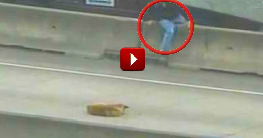 A Good Samaritan Rescues a Scared Dog from a Busy Freeway