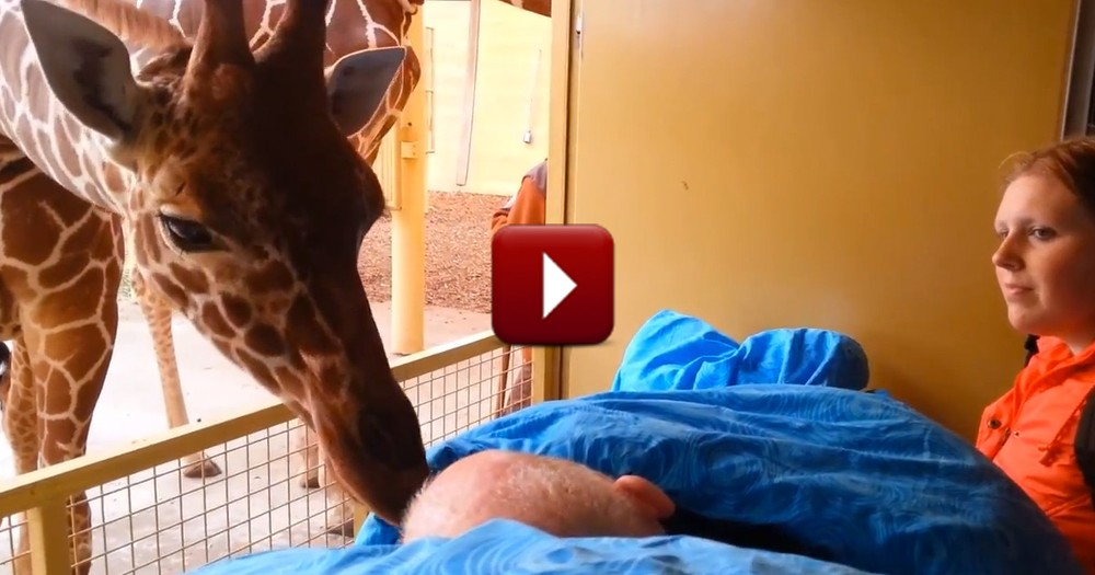 Dying Zoo Worker Gets a Goodbye Kiss From a Giraffe