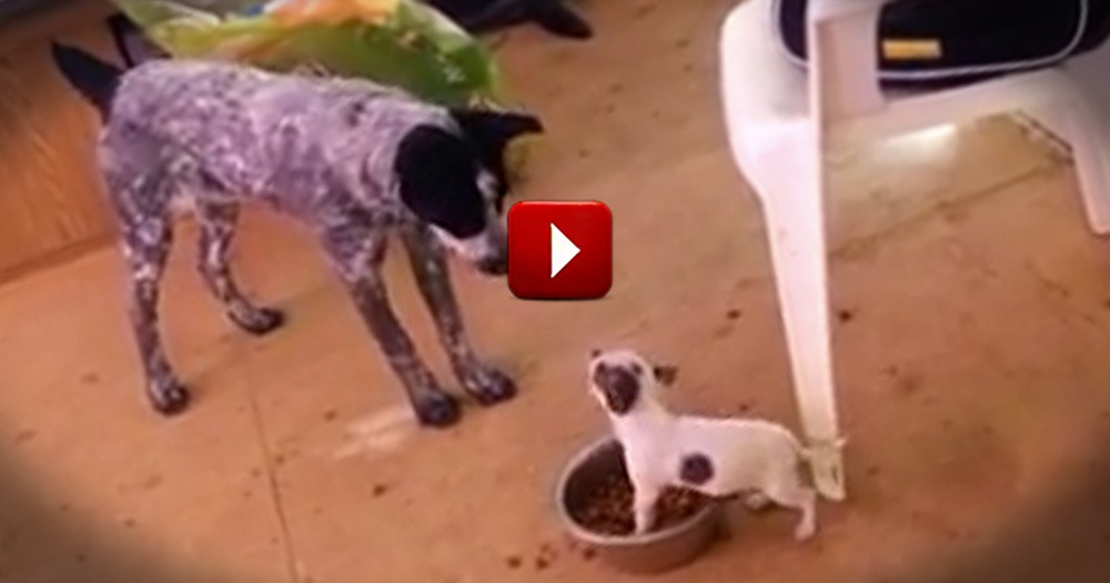 When I Saw This I Couldn't Help but Think of David and Goliath - Check Out THIS Fierce Pup!