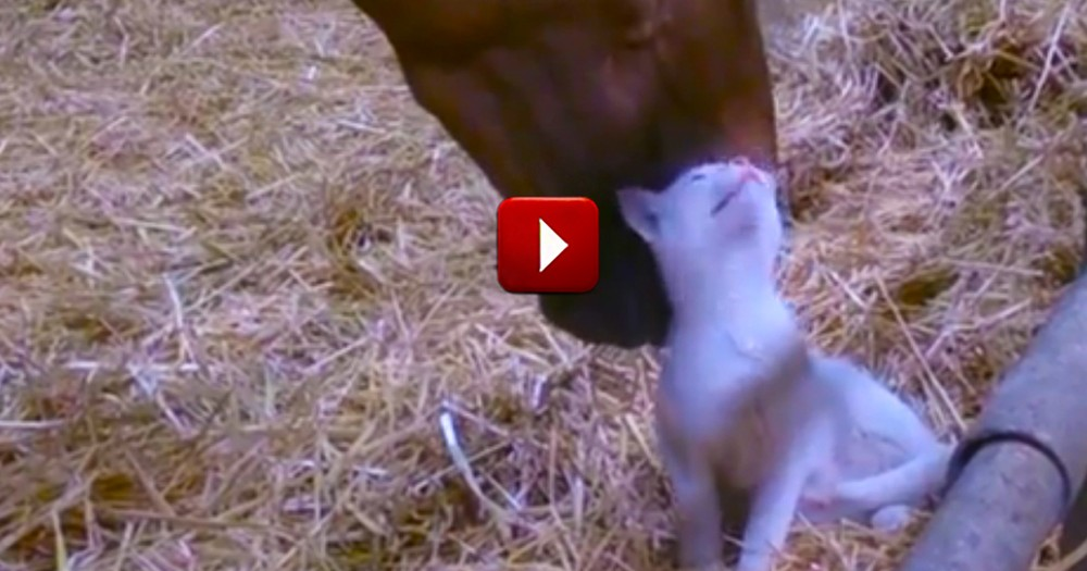 What This Horse Did Had Me Scratching My Head.  But The Funny Cat Seems to Enjoy It!