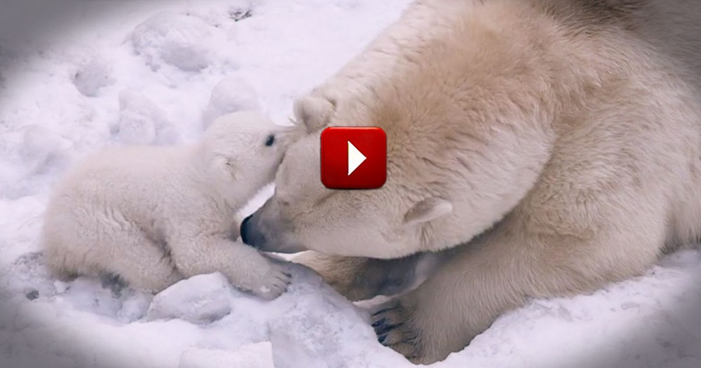 It Started With Clicking Play. It Ended With An Uncontrollable Urge to Pet a Polar Bear!