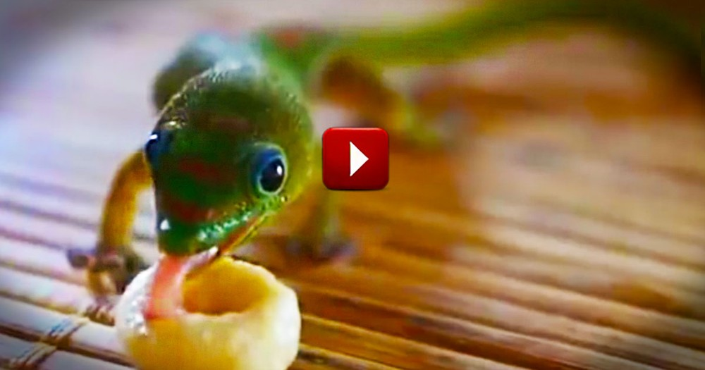 I'll Never Look At My Cereal The Same Way Again. Or Geckos--Who Knew They Were So Cute!