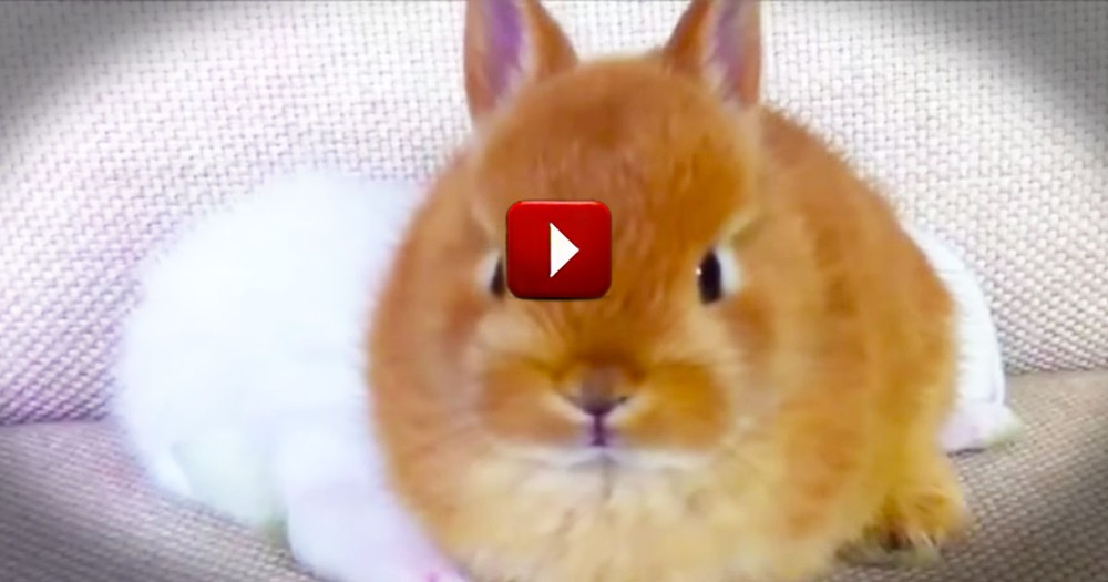 This is Silly, But I Can't Stop Watching! So Many Bunnies . . . So Much Cuteness!
