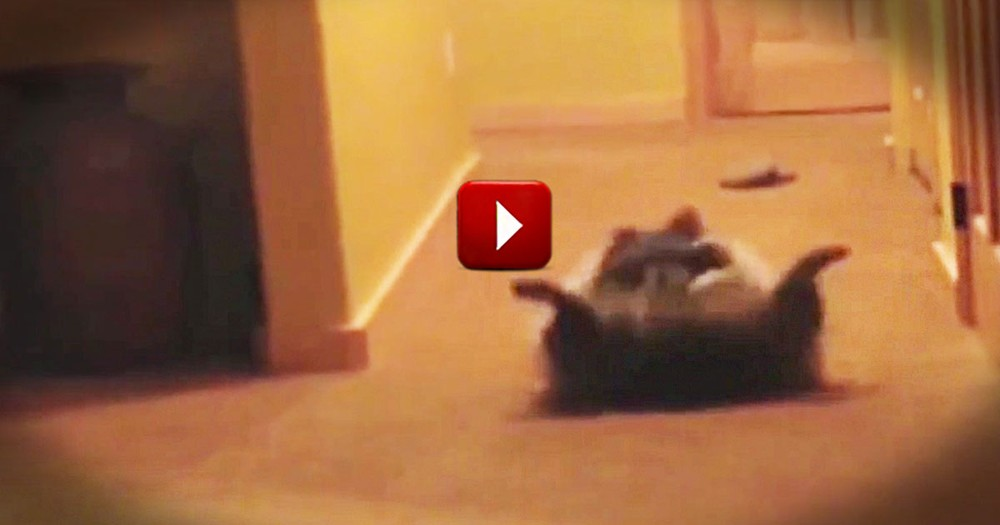 15 Seconds In You'll Be Rolling On The Floor. And You Won't Be The Only One! LOL
