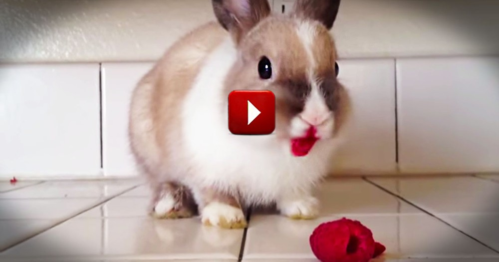 What This Bunny Uses As Lipstick Made Me Giggle. This Could Not Be Any Cuter!