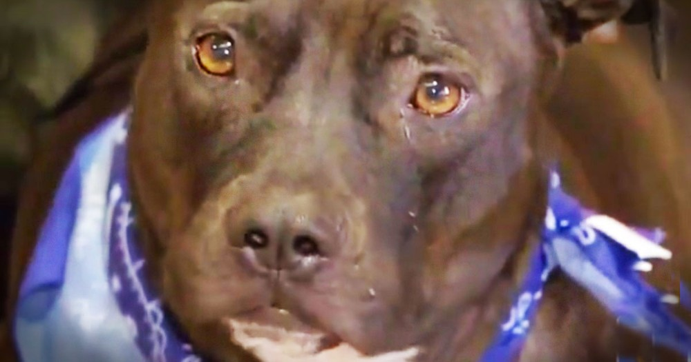 The Shelter Thought It Was All Over for This Poor Pup. 'Til This Beautiful Girl Got Her Happy Ending