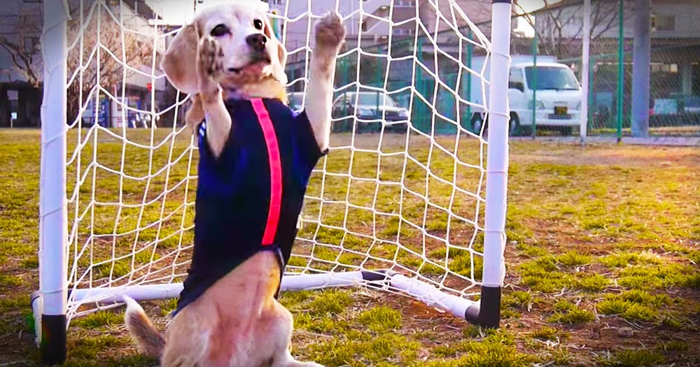 Apparently, This Pup Has World Cup Fever.  And It's Never Looked So Cute!