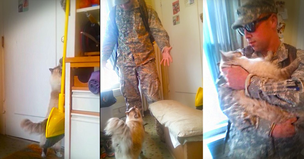 What This Kitty Does at 1:18 Didn't Make My Day--It Made My Week! This Military Reunion Is So Sweet!