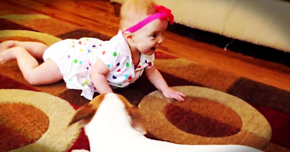 I Didn't Think This Baby's Crawling Lesson Could Get Any Cuter. Until I Saw Her Teacher--So Cute!