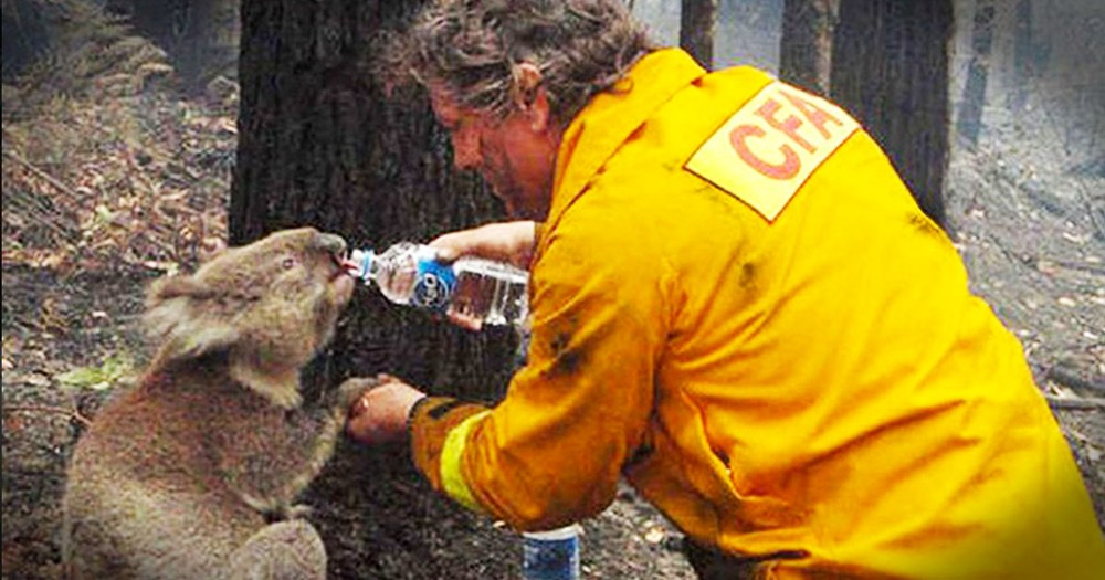 These 21 Acts of Kindness Towards Animals Are So Special... I Teared up When I Saw #16!