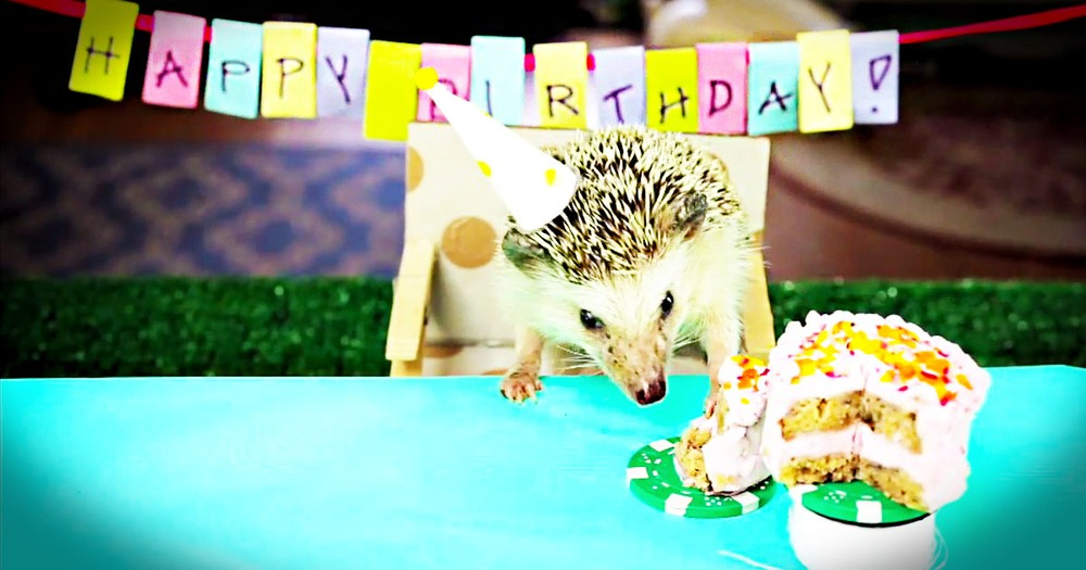 Surprise! Here Is One Hedgehog Who Knows How to Party. This Birthday Is Just Too Cute For Words.