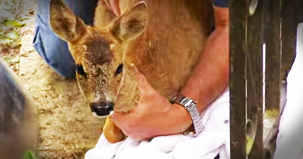 I Held My Breath Watching This Rescue. But When This Fawn Reunited With His Mom I Got Goosebumps!