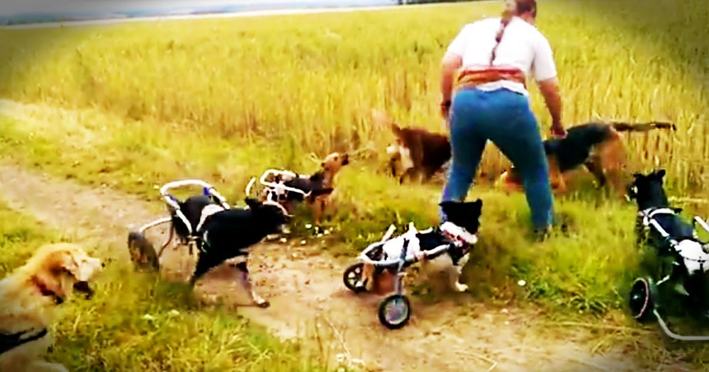 I've Never Seen A Game of Fetch Like This Before! So Many Adorable Dogs On Wheels--Oh My Heart!