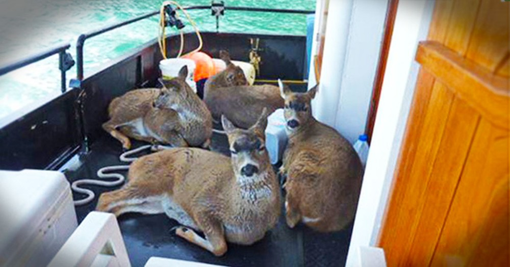 These Deer Were Trapped In The Icy Waters With No Hope In Sight. Until God Sent Help Just In Time!