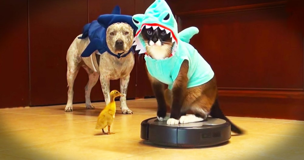 When I Saw What These Animals Did, I Couldn't Stop LOL! Who Knew A Shark Could Be So Cute?