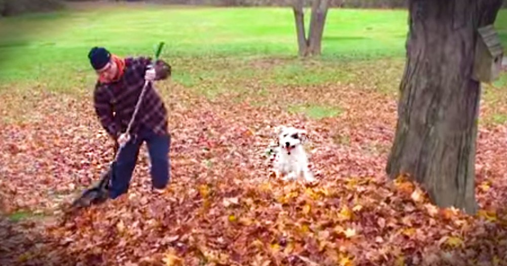 This Joyful Doggie Is Having The BEST Time. In A Pile Of Leaves - Awww