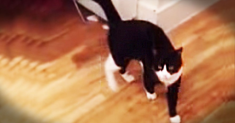 19 Seconds Into This Cat Video, You're Going to Laugh SO Hard