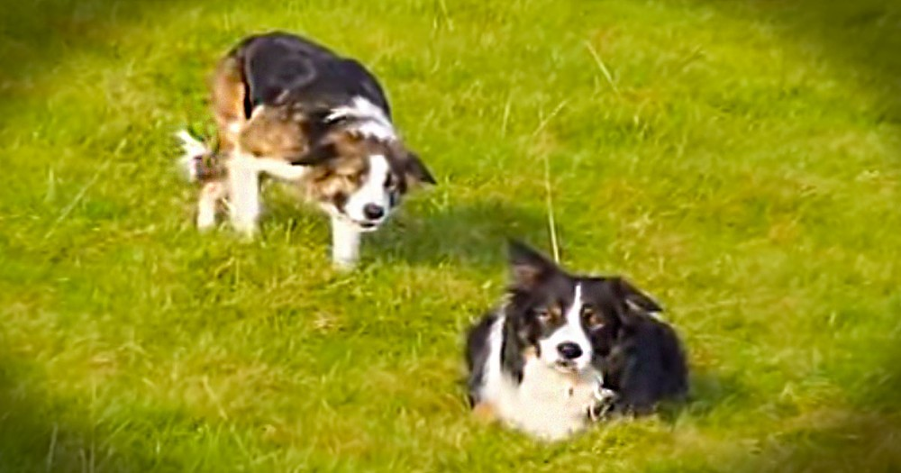 I Had No Idea What These Sneaky Pups Were Up To. But At 1:36 I Couldn't Hold Back The Giggles!