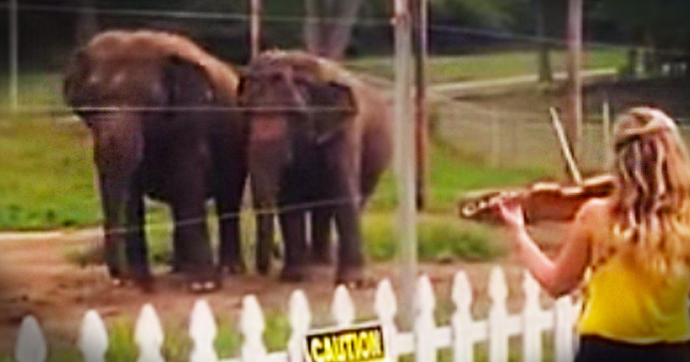 What These 2 Elephant Friends Did Next Completely Stunned Me. I Needed This Awesome Surprise Today!