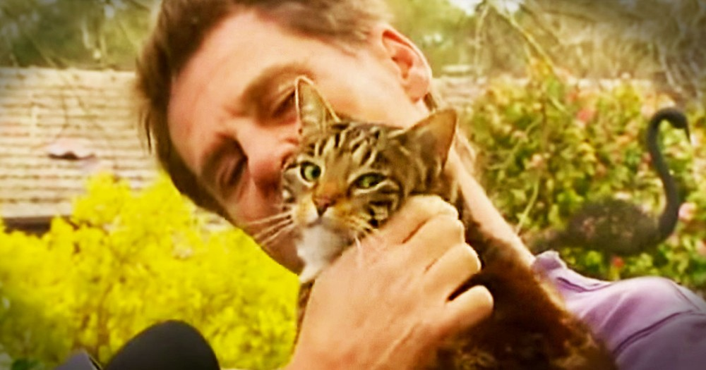 This Man Gave His Kitty A Forever Home, But HIS Life's The One That Was Saved! This Cat's A HERO!