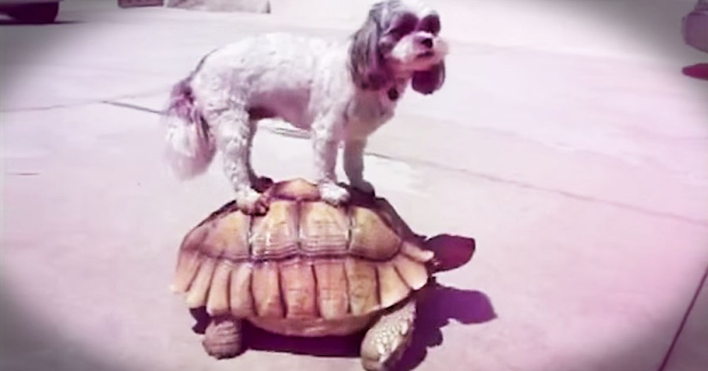 These 45 Animal BFFs Just Blew My Mind! I'm Going To Have To Watch That Again. And Again. . .