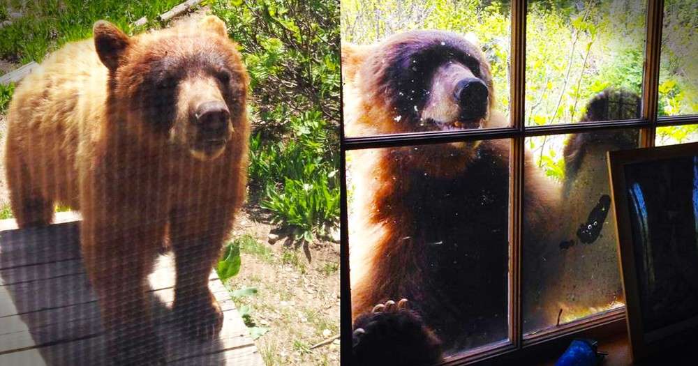 My Heart Couldn't Bear Seeing This Grizzly at the Door...But What He Did Blew Me Away!