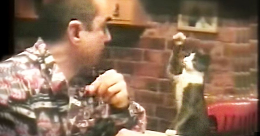 When I Saw HOW This Kitty Asks For Food I Was Stunned. WHY She Does It Will Melt Your Heart!