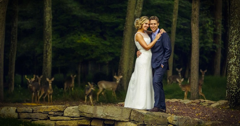 Oh, Deer! We Bet The Bride And Groom Didn't Expect THESE Guests!
