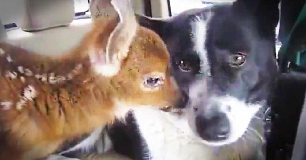 The Truth About This Unlikely Friendship Is Stunning. I Can't Get Over This Pup's Love For His Baby!