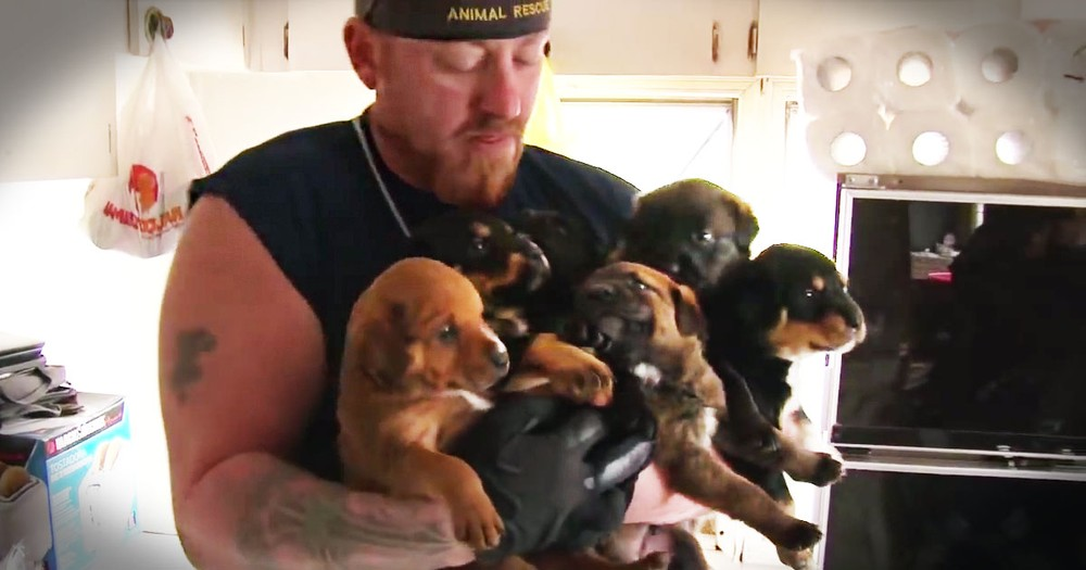 You Won't Believe How These Poor Critters Lived. Until This 1 Dramatic Rescue Saved 100s of Them!