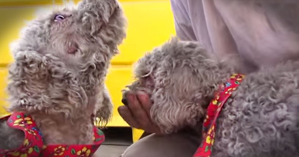 This Brother And Sister Were Struggling To Survive In A Junk Yard. Until They Got An AMAZING Rescue!