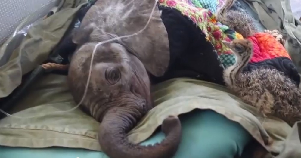 This Baby Elephant Was Trapped In A Well. But 2 Furry Friends Stayed By His Side Until Help Arrived.