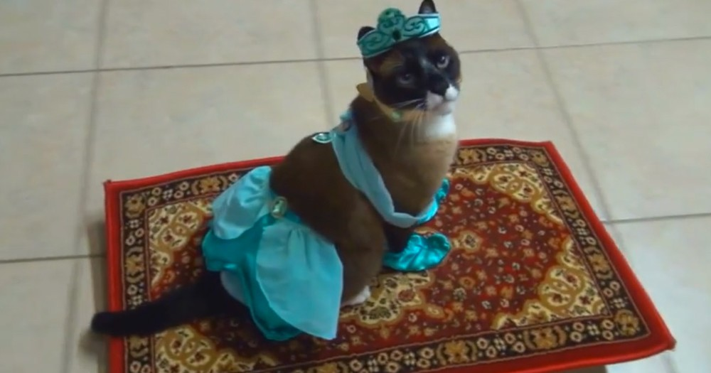 Apparently, This Kitty Loves To Play Dress Up. Watching The Furry Princess Cruise Around Made My Day