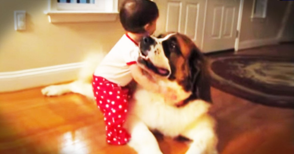What Happens The First Time A Baby Hugs A Dog? THIS Happens And It Left My Heart In A Puddle.