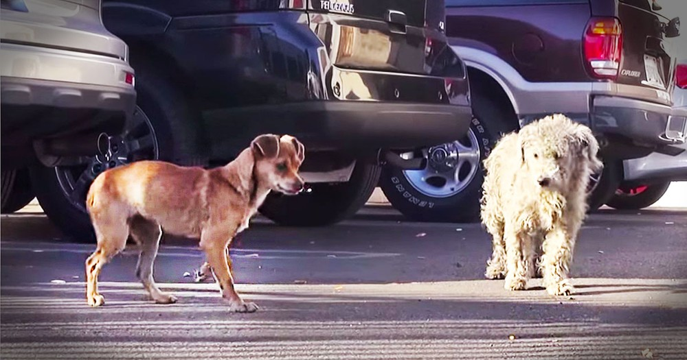 2 Dogs Separated By Fear Get A Beautiful Transformation
